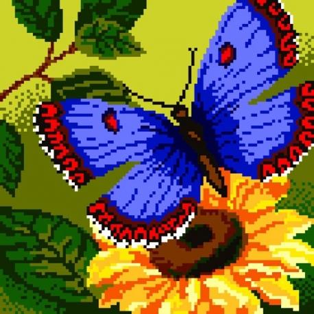 Motyl (No 5096)