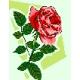 Róża (No 5101)