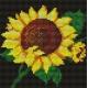 Słonecznik (No 5262)