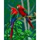 Haft krzyżykowy - do wyboru: kanwa z nadrukiem, nici Ariadna/DMC, wzór graficzny - Papugi VI (No 7174)