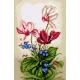 Kwiaty Fiołki  - kanwa z nadrukiem (No 5440)