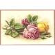 Kanwa AIDA 14ct (54 oczek/10 cm) kolor naturalny tkanina do haftu krzyżykoweg