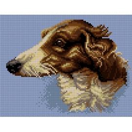 Pies -owczarek collie  (No 5482)