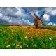Wiatrak - łąka z kwiatami (No 7302)