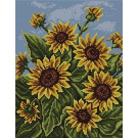 Obrazek do haftu krzyżykowego - kanwa z nadrukiem kolorowym Polne słoneczniki Słoneczniki (No 7059)