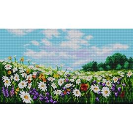 Kwiecista łąka (No 7132)