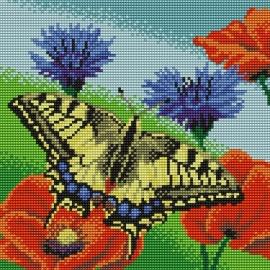 Motyl (No 5265)