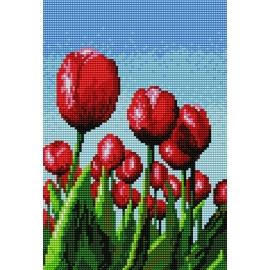 Tulipany (No 5239)